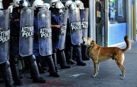 perro aullando ante la policía