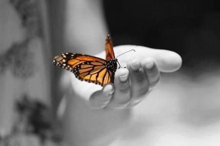 mariposa en la mano