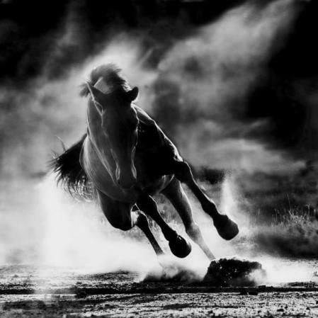 caballo desbocado