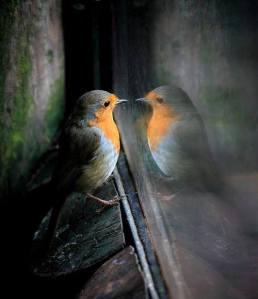 pájaro en espejo