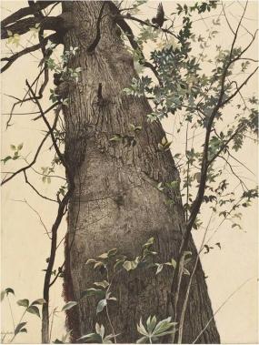 andrew-wyeth-el-roble-1948
