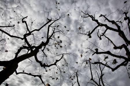 arboles-y-nubes